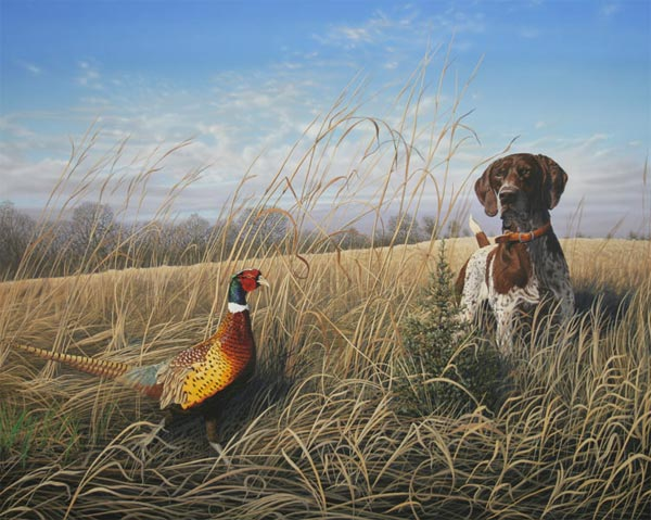 German Shorthair Pheasant Hunt