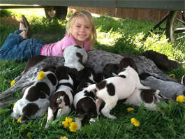 German Shorthair Puppies